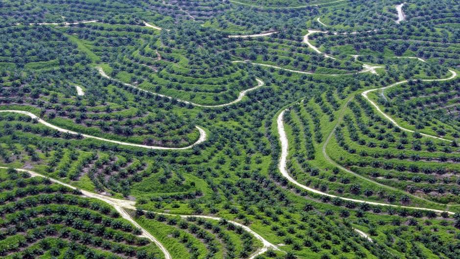 Für mehr Nachhaltigkeit: Regenwald-Killer Palmöl: Mit diesen Tricks verbraucht man weniger davon