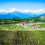 Eine Einführung in den georgischen Wein
