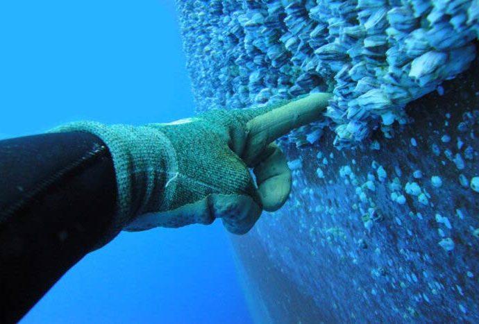 Industrielle Schiffsrumpfreinigung unter Wasser