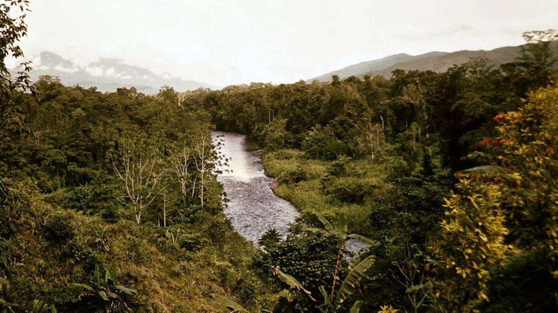 Artenreichste Insel